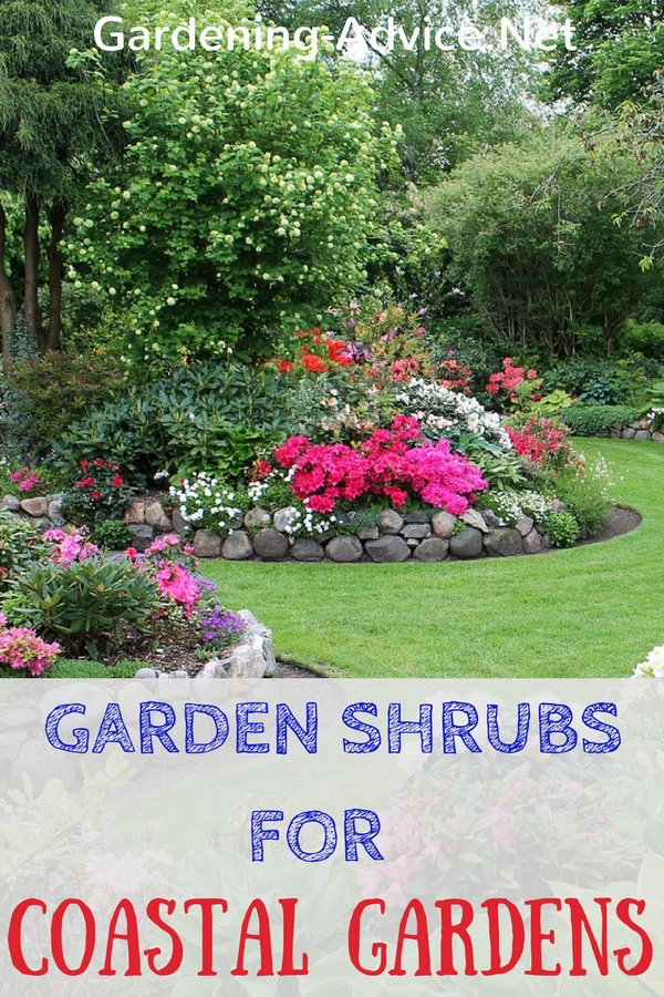 Garden Shrubs For Coastal Climates