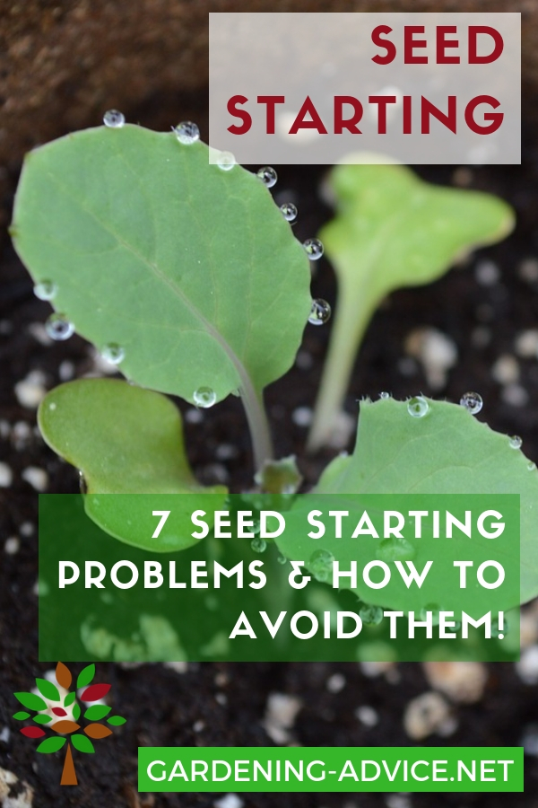 Do you want to grow your own food from scratch? Then starting your own vegetable seeds! #gardening #gardeningtips #homesteadgarden #organicgardening #homesteading  #vegetablegardening