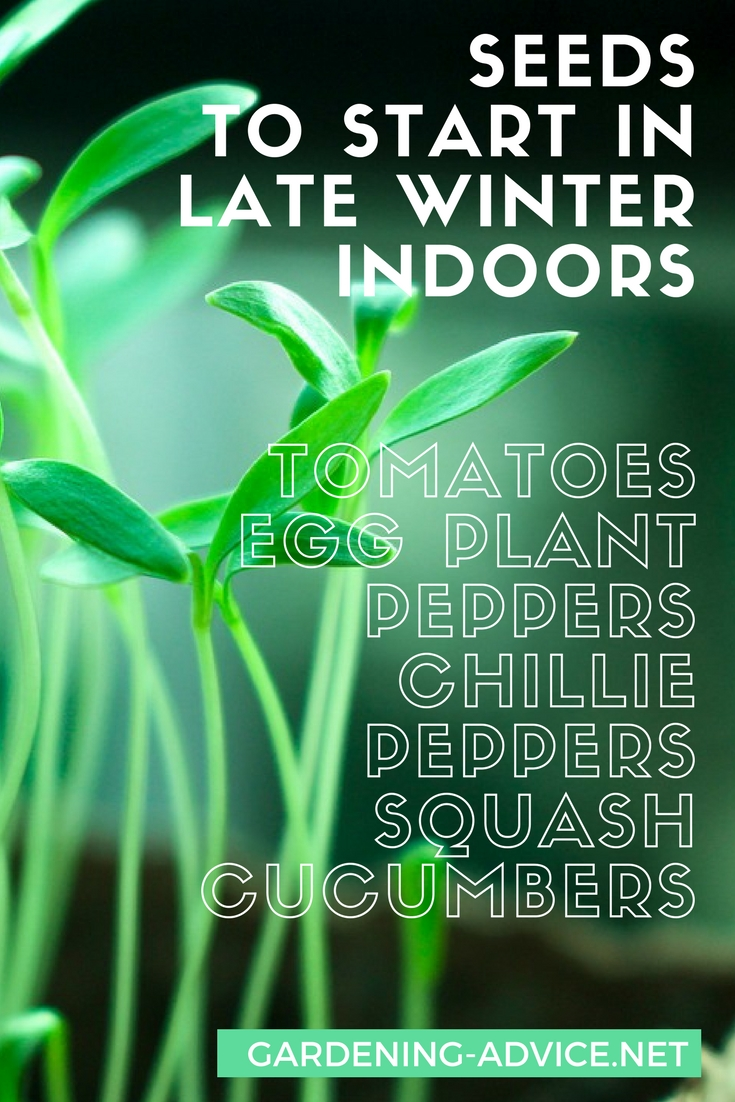 Vegetable Seeds To Start Indoors In Late Winter #gardeningtips #organicgardening #vegetablegardening #gardening