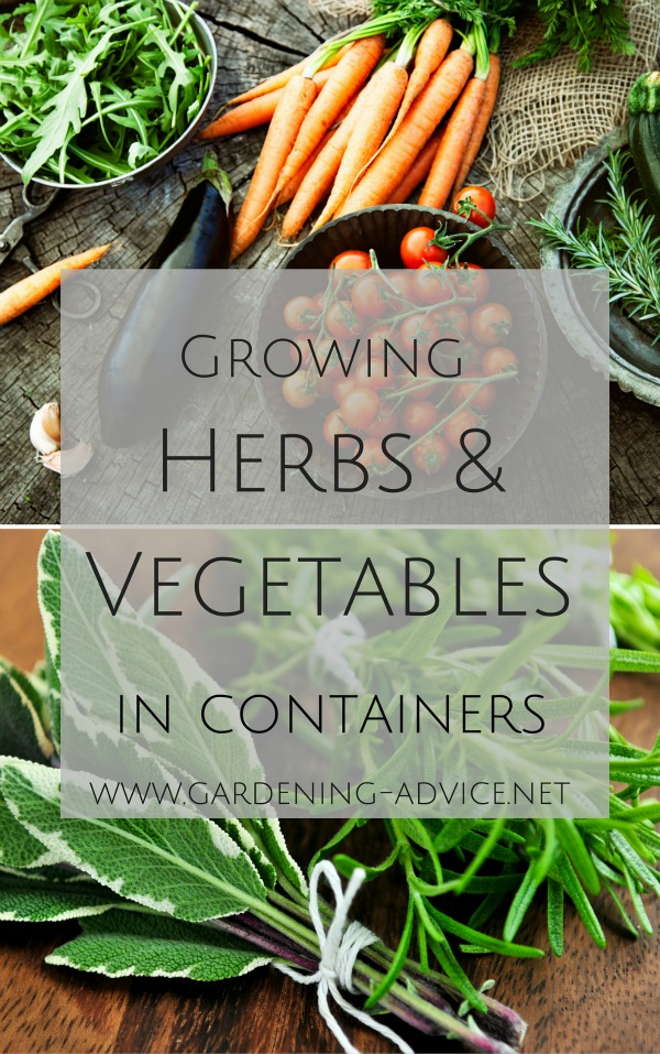 ebook growing herbs & Vegetables in containers