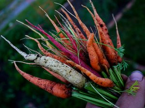 bunch of mixed carrots
