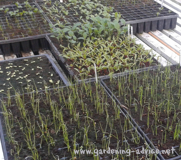 herbs from seed