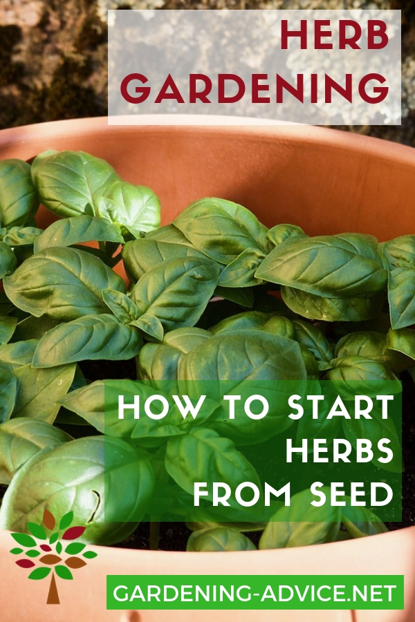 Growing Herbs From Seeds