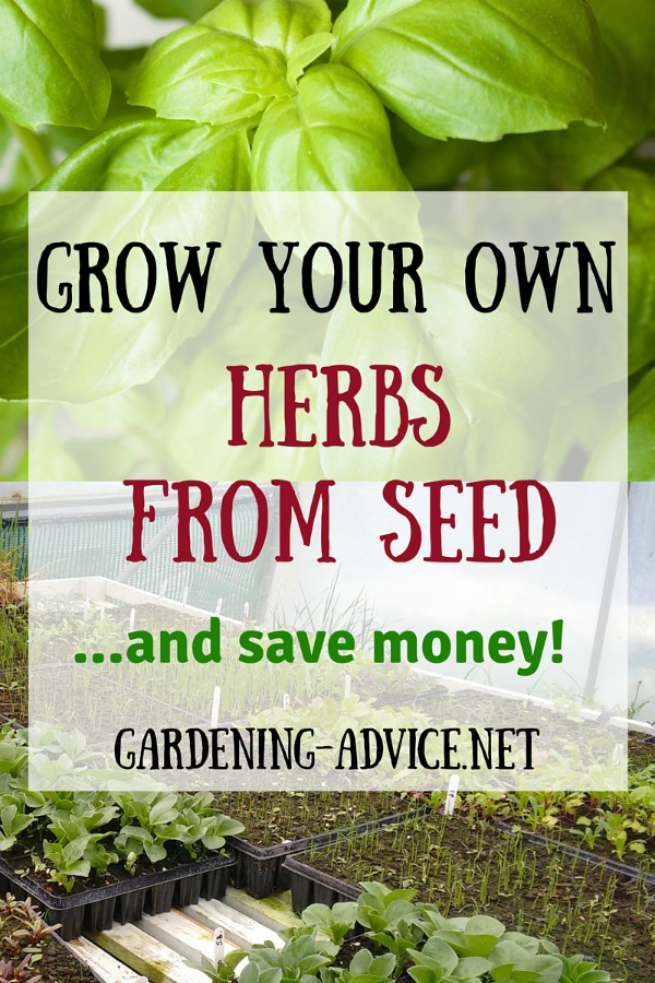 Grow Your Own Herbs From Seeds And Save Money #gardeningtips #gardening #herbgardening #herbs #urbangardening #homesteading #homesteadgarden