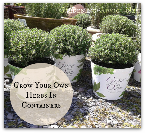 grow yourown herbs in containers