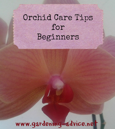 orchid care tips for beginners