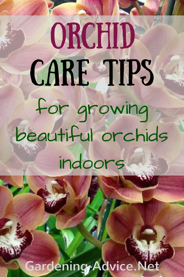 Orchid Care Instructions And Tips