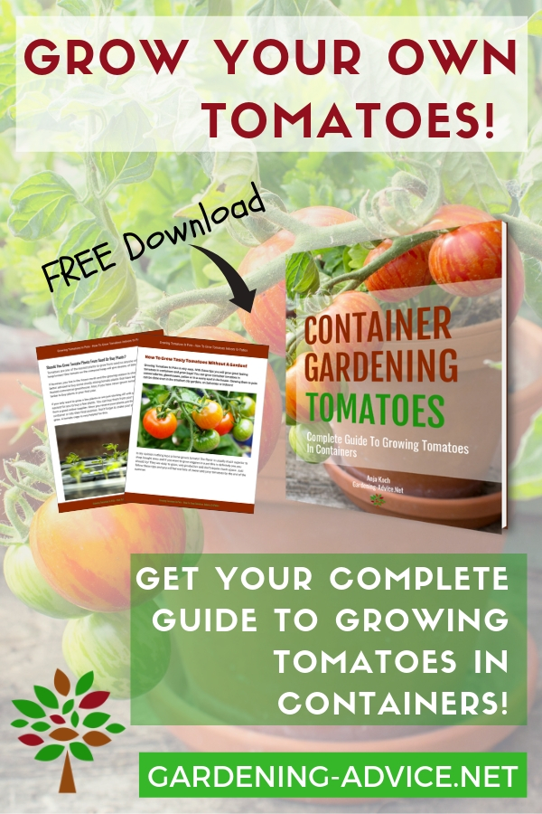 Growing Tomatoes In Pots - How To Grow Tomatoes Indoors Or