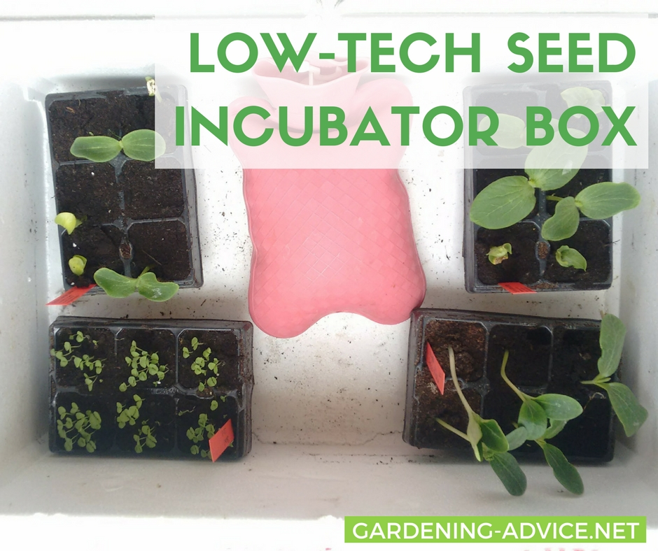 Starting seeds with a diy incubator box #gardeningtips #organicgardening #urbangardening #gardening #homesteading #homesteadgarden #vegetablegardening