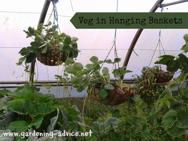 vegetables in hanging baskets