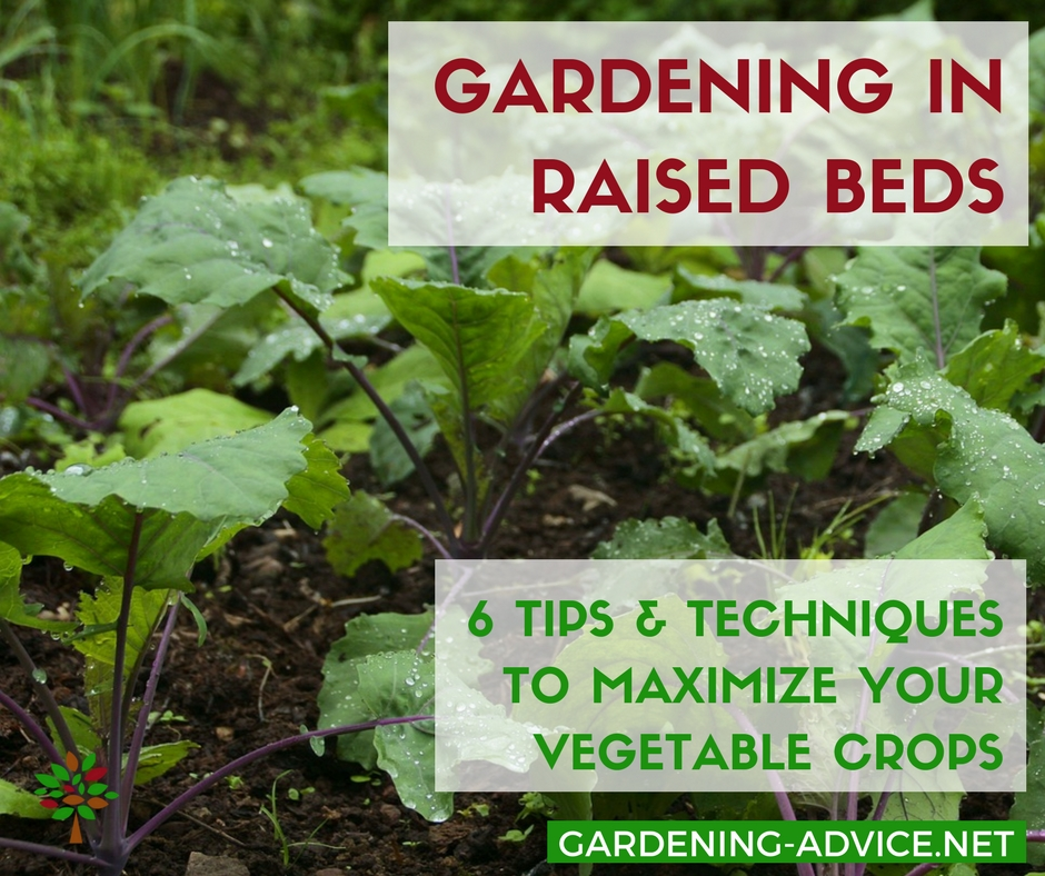 6 tips for growing vegetables in raised beds efficiently for Gardening 101 vegetables