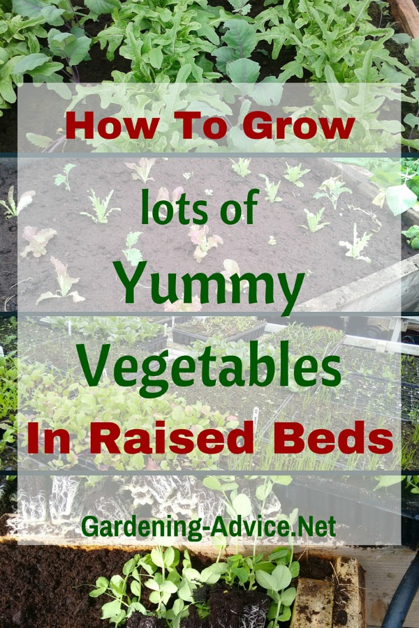 6 Tips For Growing Vegetables In Raised Beds Efficiently