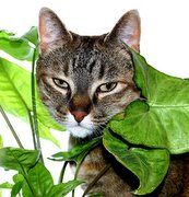 cat and house plant