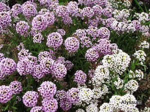 How to grow flowers flower gardening advice for Low growing plants for flower beds