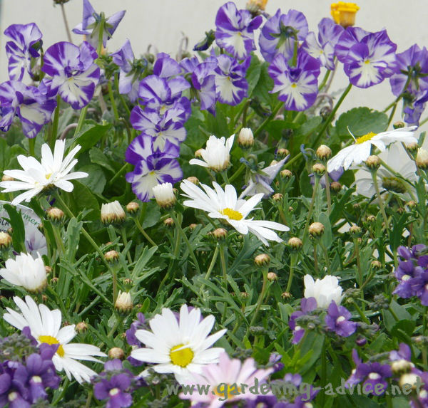 How To Grow Flowers Flower Gardening Advice
