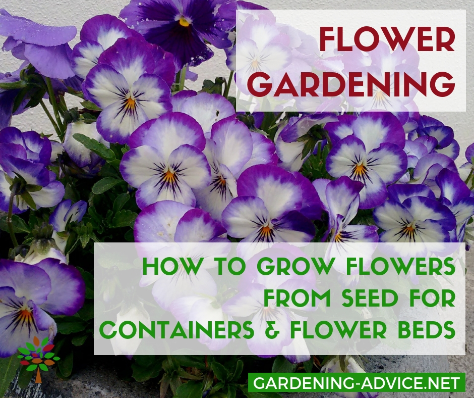 How to grow flowers from seed #gardening #gardeningtips #flowergardening  #flowergarden #organicgardening #flowers #containergardening