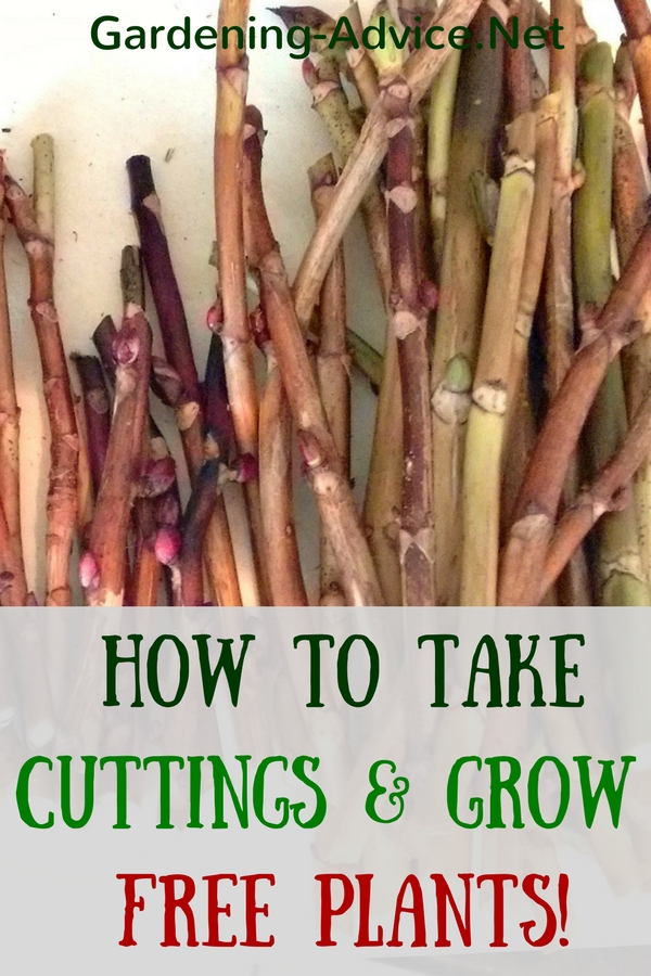 how to take cuttings