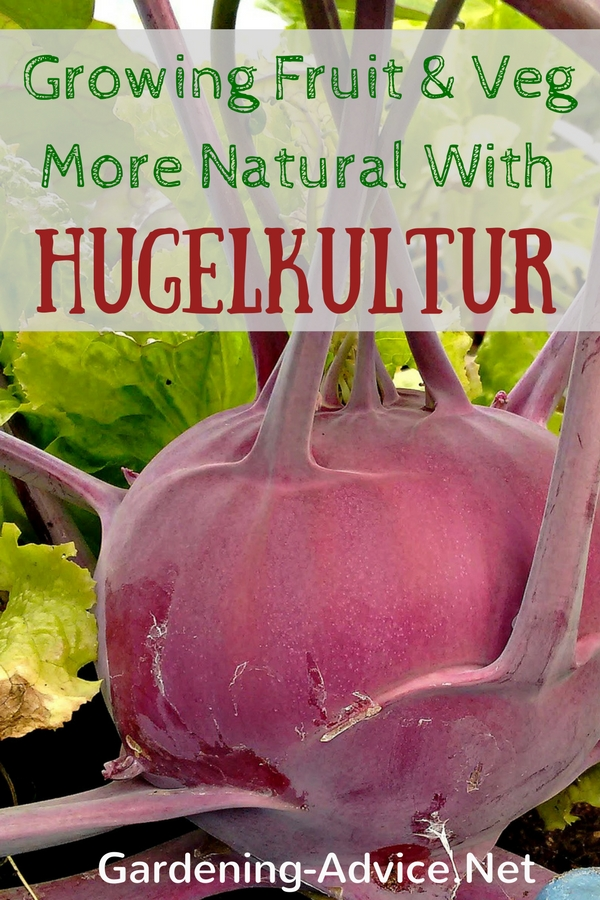 Hugelkultur for growing food