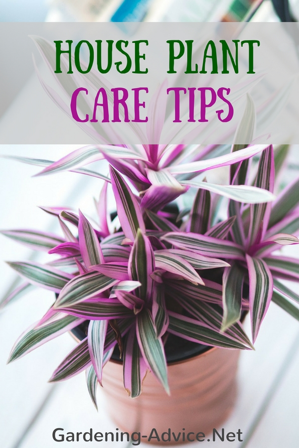 House Plant Care Tips