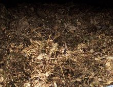 leaf compost, leaf mulch