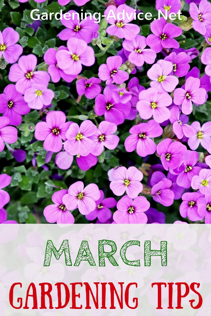 March Gardening Tips to get your garden ready for spring! #gardeningtips #gardening #organicgardening #urbangardening #permaculture #homesteading