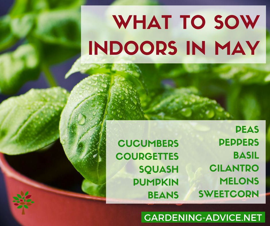 What To Sow In The Garden In May #gardeningtips #gardening #vegetablegardening #homesteading #homesteadgarden #urbangardening