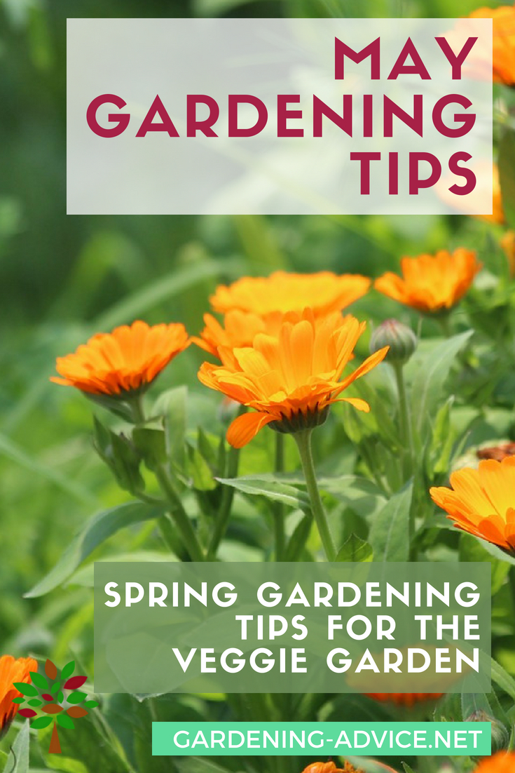 May Gardening Tips #gardeningtips #gardening #vegetablegardening #homesteading #homesteadgarden #urbangardening