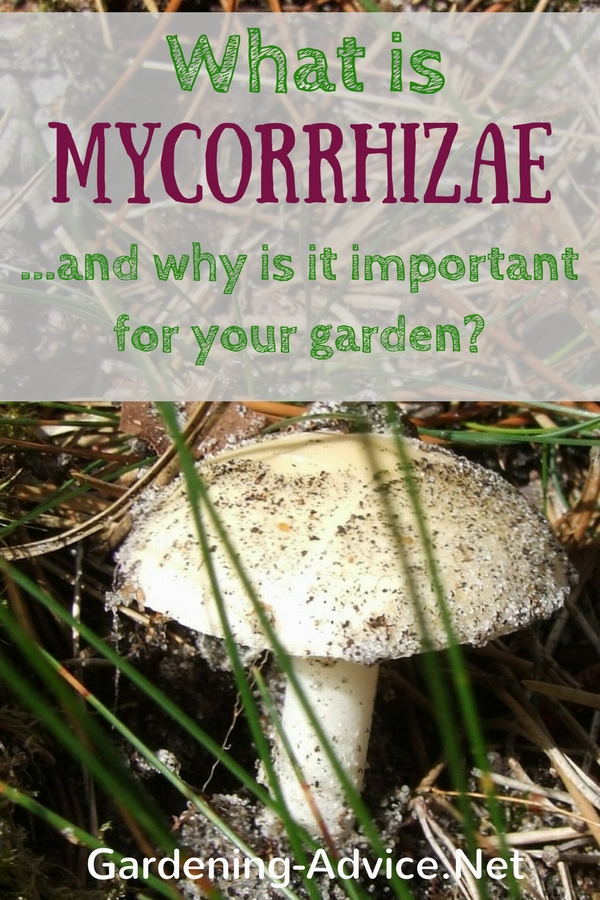 What is Mycorrhizae?