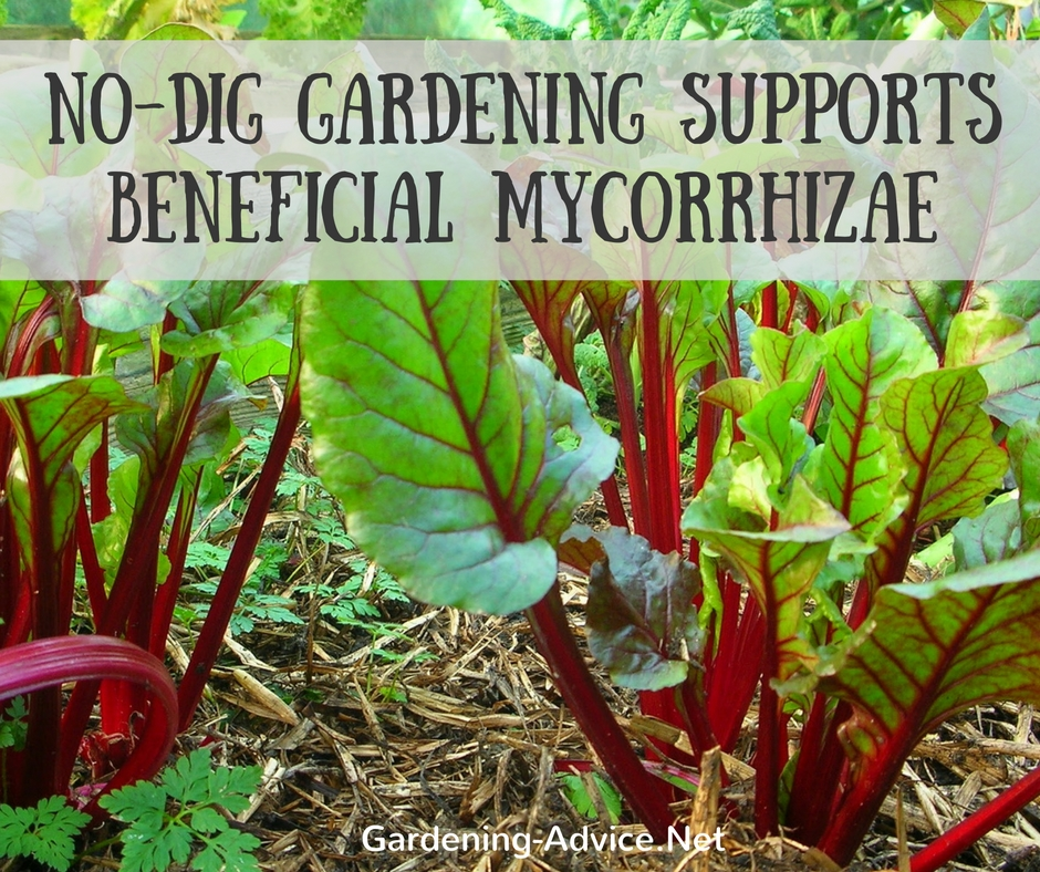 No-Dig Gardening Supports Beneficial Micorrhizae