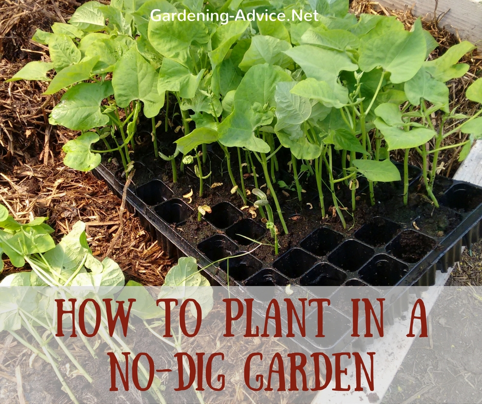 The No Dig Vegetable Garden
