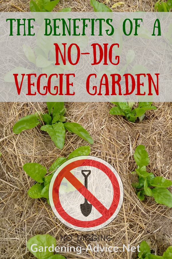 The Benefits Of A No Dig Garden