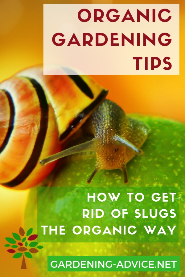 How To Get Rid Of Slugs