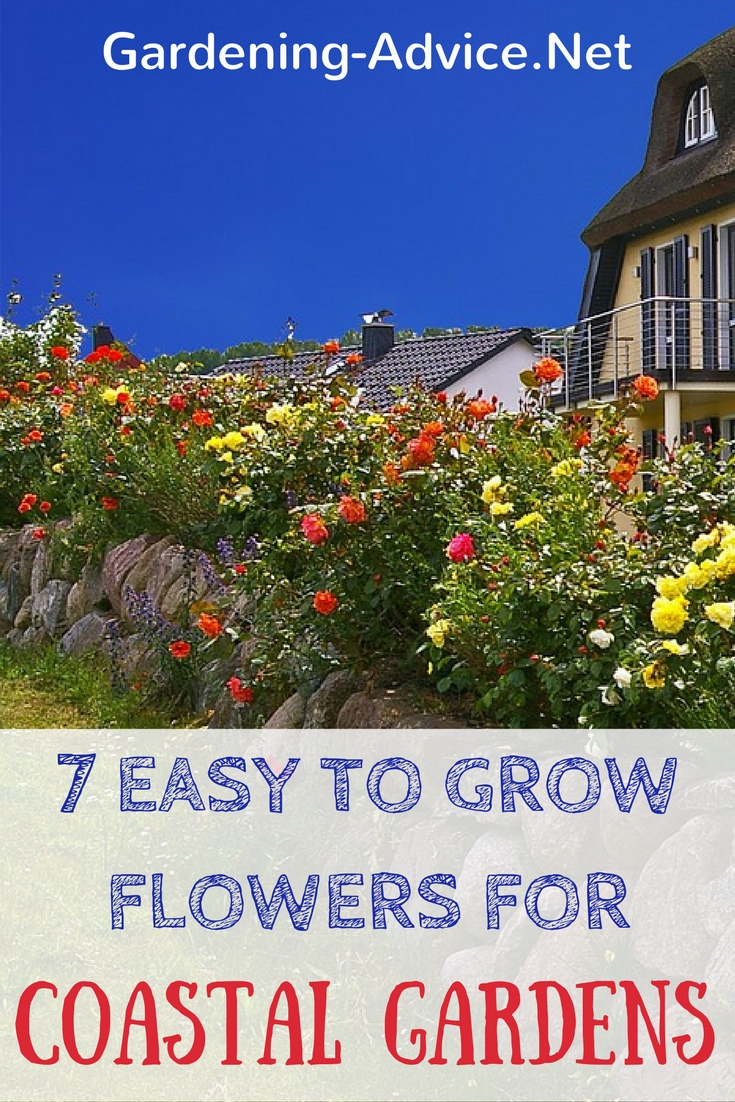 These easy to grow flowers need little maintenance, add great color to your garden and of course grow year after year.  #gardeningtips #coastalgarden #gardening #flowergardening