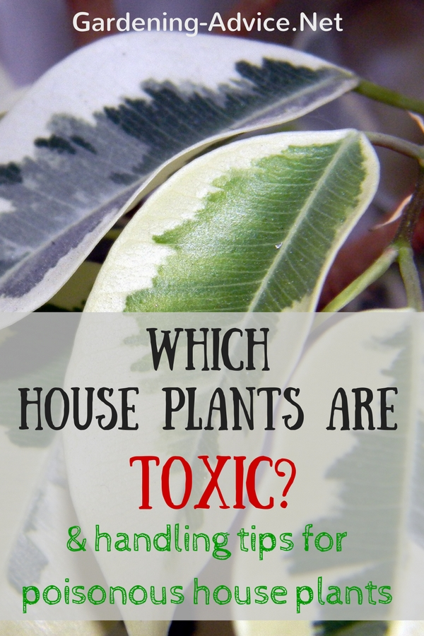 toxic house plants