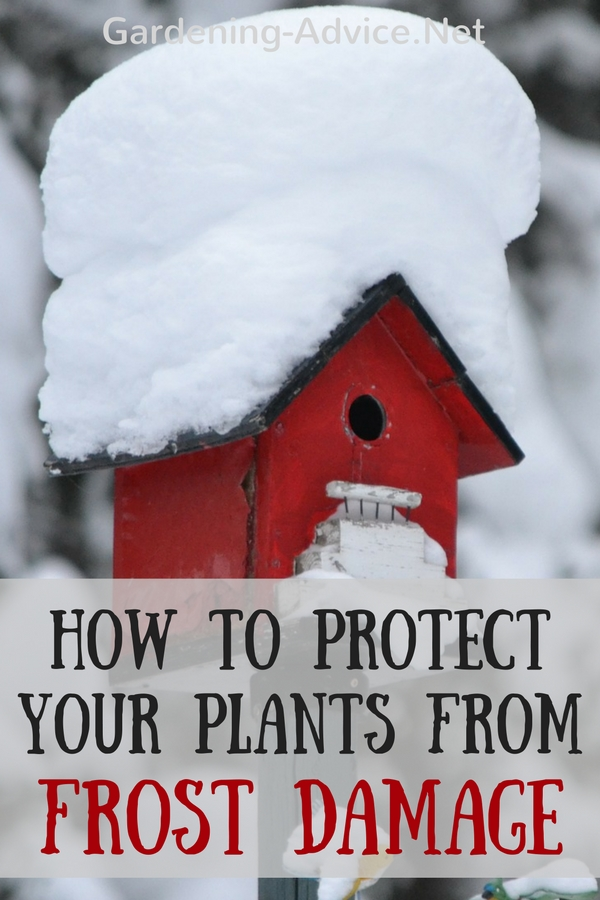 protect plants from frost to avoid damage