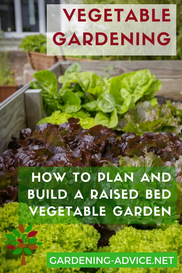 Want to grow lots of delicious vegetables? Here is how to plan and build a raised bed vegetable garden that works! #gardening #gardeningtips #organicgardening  #urbangardening #vegetablegardening