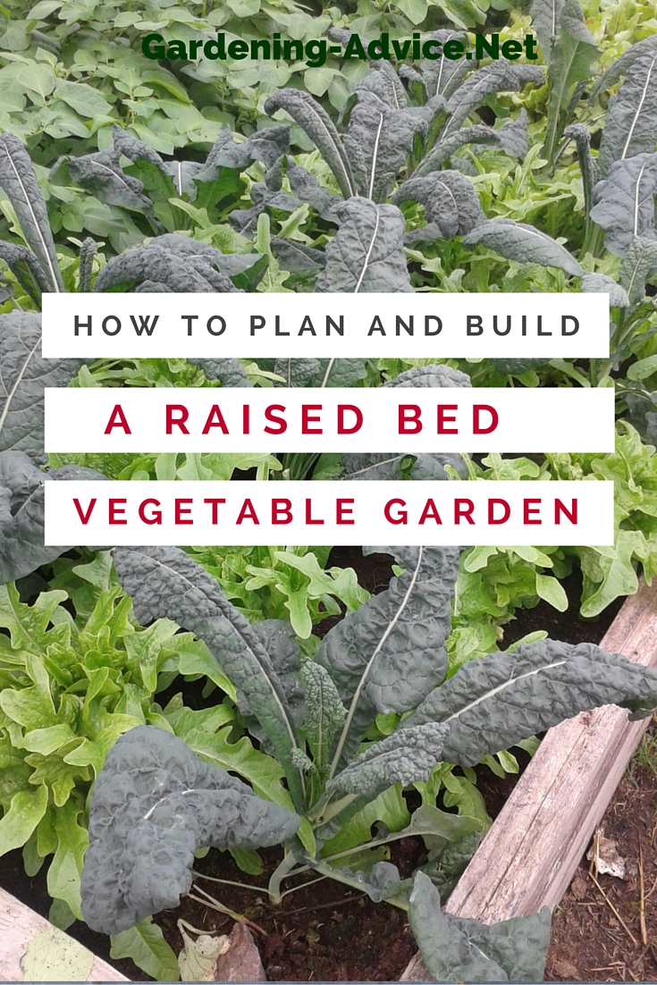 The raised bed vegetable garden for Raised vegetable garden