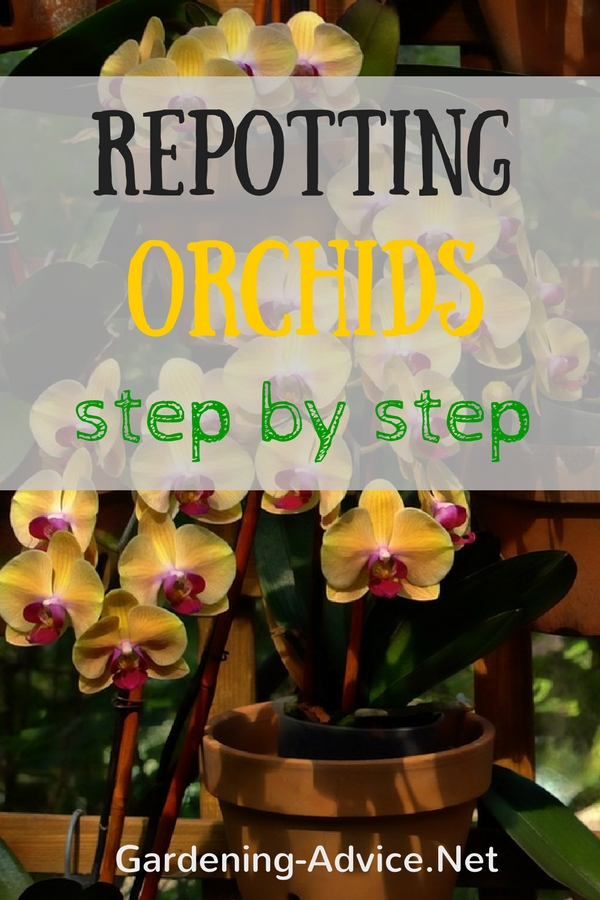 how to transplant orchids