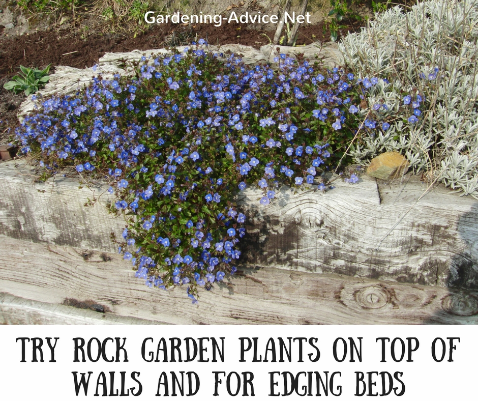 Rock Garden Plant For Walls