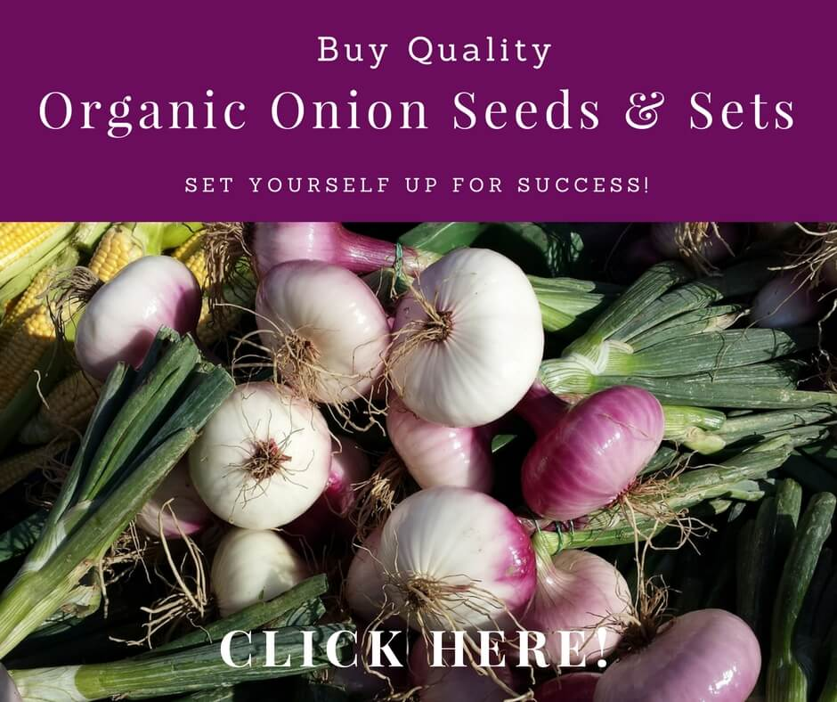 buy onion seeds and sets