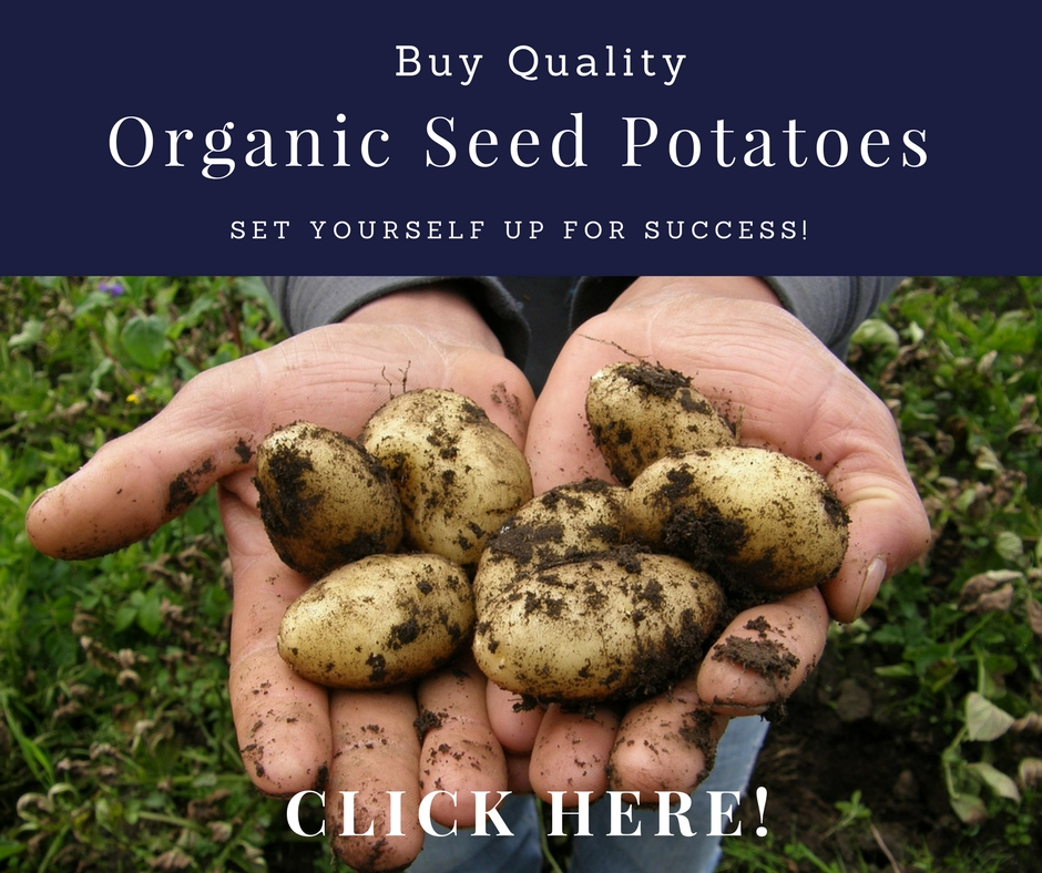 organic seed potatoes