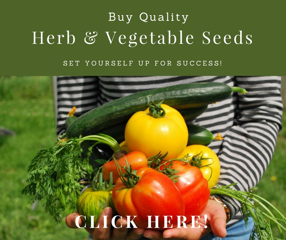 Buy Quality Vegetable Seeds #gardeningtips #vegetablegardening #gardening #organicgardening