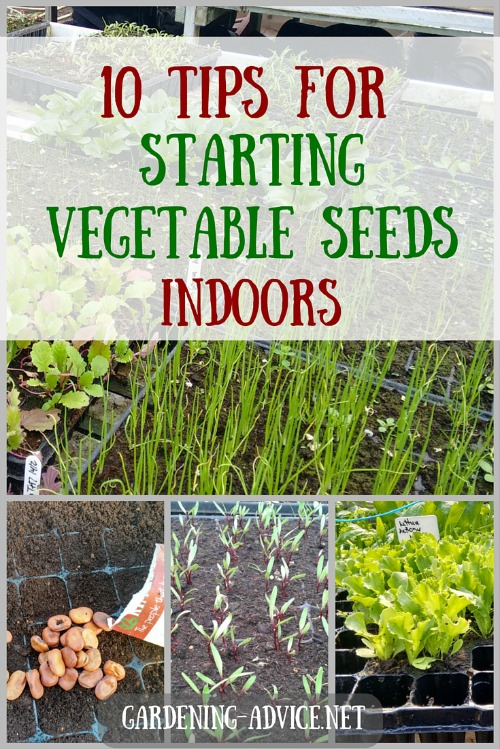10 tips for starting vegetable seeds indoors for Starting a vegetable garden