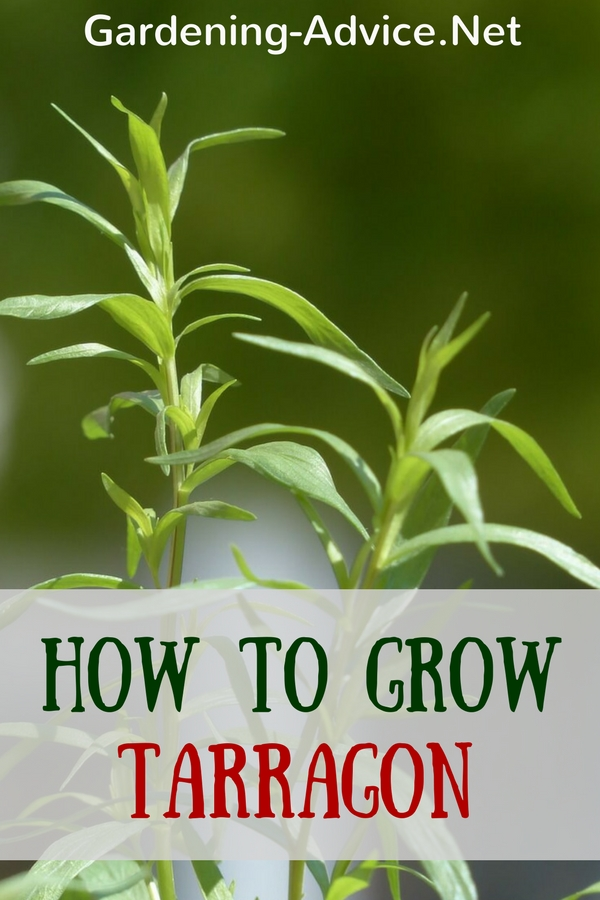 Herbs ebook download culinary