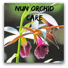 Growing Orchids Indoors Orchid Care Instructions And Tips