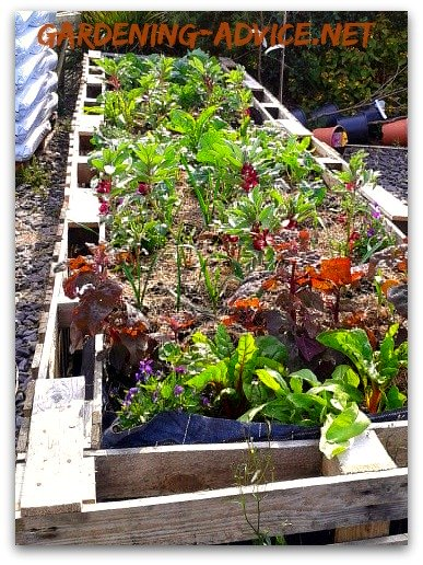 new raised bed planted with vegetables