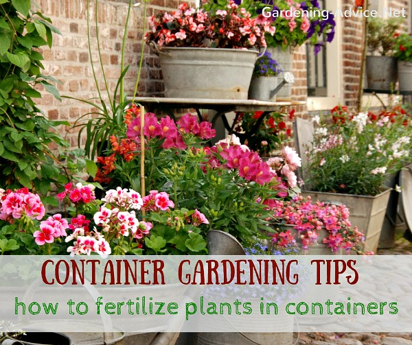 How to fertilize plants in containers