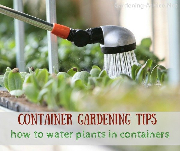 How to water plants in pots
