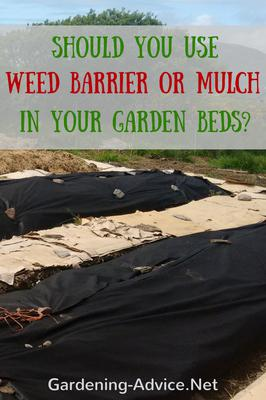 Is it better to use a weed barrier in a garden bed, or mulch to keep down weeds?