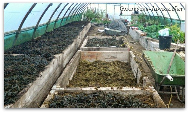 filling the beds with manure and seaweed